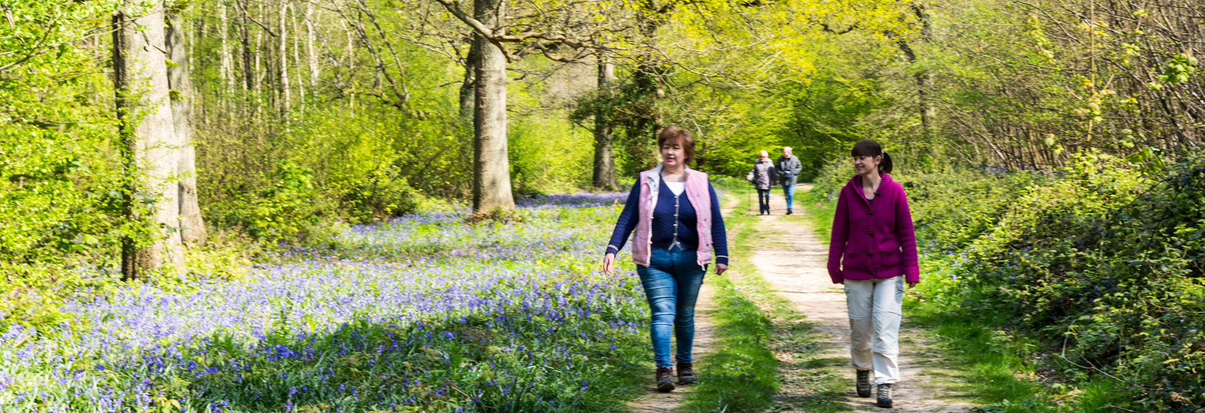 Walking through the bluebells at Hucking Estate