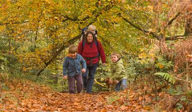 Autumn leaves family walking at Bedgebury National Pinetum and Forest