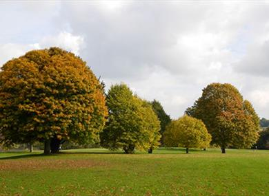 Mote Park Tree Walk