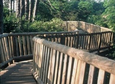 Whatman Park Treetop Walk